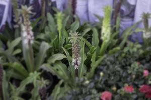 plant in bloei