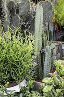planten, vetplanten en cactussen