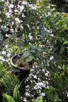groene tuinplanten
