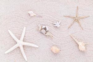 schelpen in zand