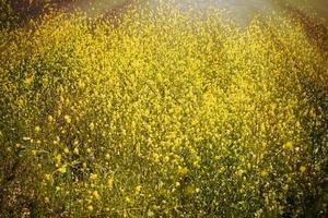 gele wilde bloemen op een rivieroever