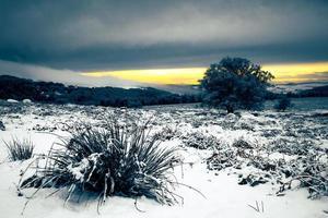 besneeuwde landschap van struiken en bomen met laagstaande zon in bewolkte hemel