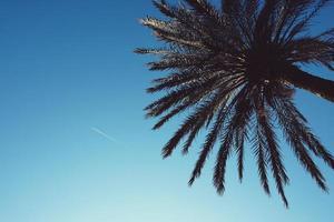 palmboom in en blauwe lucht in de lente foto