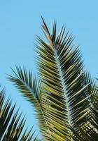 groene palmbladeren en blauwe hemel foto