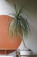 interieurontwerp met een kamerplant foto