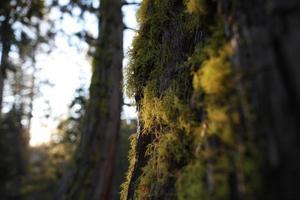 gouden mos op bomen foto