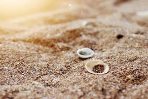 schelpen op het strand, ochtendzee, wazig tafereel