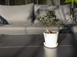 tafel met vrije ruimte met groene plant foto