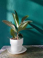 tafel met vrije ruimte met groene plant