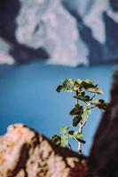 groene plant op bruine rotsformatie in de buurt van blauwe zee overdag
