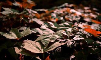 bruin gekleurd blad en loof foto