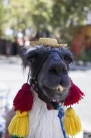 versierde lama op straat foto