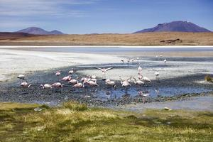 laguna colorada in bolivia foto