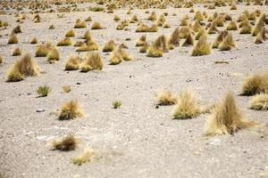 dali woestijn in bolivia foto