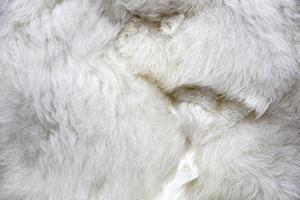 baby alpaca wol foto