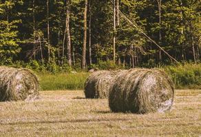 balen hooi in een veld naast een groen bos