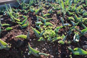 plantenspruiten en jonge planten met macrodetails