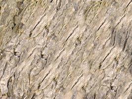 close-up van boomschors voor achtergrond of textuur foto