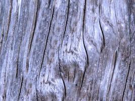 houten panelen voor achtergrond of textuur foto