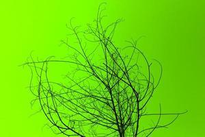 gedroogde boom op groen foto