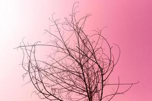 gedroogde boom op roze foto