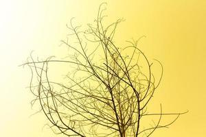 gedroogde boom op oranje hemel foto