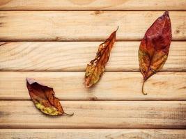 gedroogde bladeren op hout foto