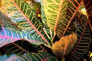 levendige kleurrijke abstracte natuurlijke bladeren textuur