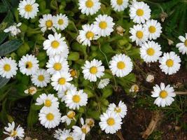 gele bloemen en struiken in een tuin foto