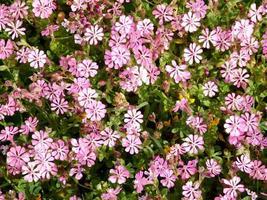 paarse en witte bloemen en struiken in een tuin foto