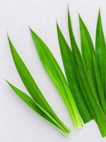 pandanus groene bladeren foto