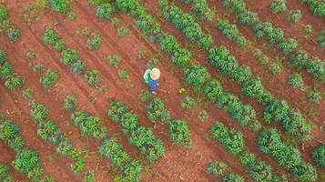 luchtfoto bovenaanzicht van boeren die werken op cassave boerderij