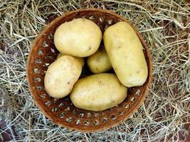 aardappelen in een rieten mand op een hooi of stro achtergrond foto