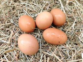 bruine eieren op een hooi of stro achtergrond