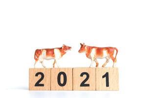 kleine os en houten blokken met nummers 2021 geïsoleerd op een witte achtergrond, een symbool van het jaar 2021