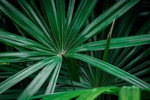 groene palmbladeren
