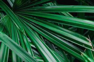 groene palmbladeren foto