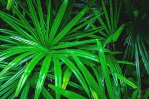 close-up van groene palmbladeren