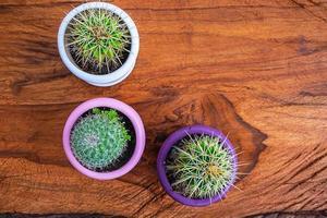 drie cactussen in potten op een houten tafel