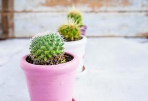 drie cactussen in potten op een blauwe houten tafel