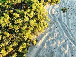 groene bladeren en struiken naast een stukje wit zand foto
