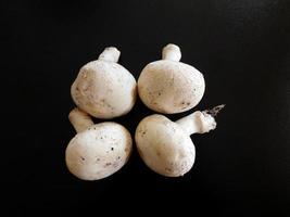 vier witte champignons op een zwarte achtergrond foto