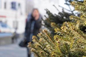 takken van een sparrenboom met een wazige stadsachtergrond in Vladivostok, Rusland foto