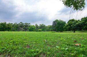 landschap van park met groen gras, bomen en bewolkte blauwe hemel