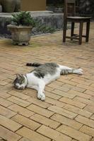 binnenlandse kat gekoeld in de tuin
