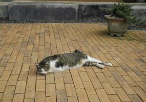 binnenlandse kat liggend in de tuin