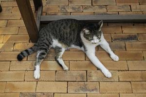 grijze kat liggend op baksteen