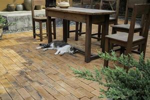 kat liggend in een tuin