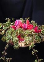 roze en groen bloemstuk met een donkere achtergrond foto