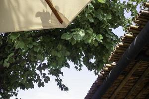 bamboe dak huis foto